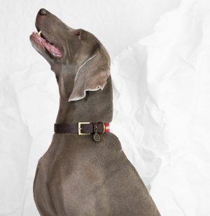 Περιλαίμιο Σκύλου Poldo Dog Couture Portofino Dog Collar